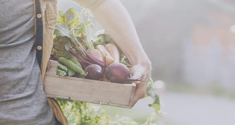cesta de verduras de huertos urbanos